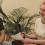 Ia-ți în stăpânire viața prin Respirație Conștientă – Interviu cu Dan Brule